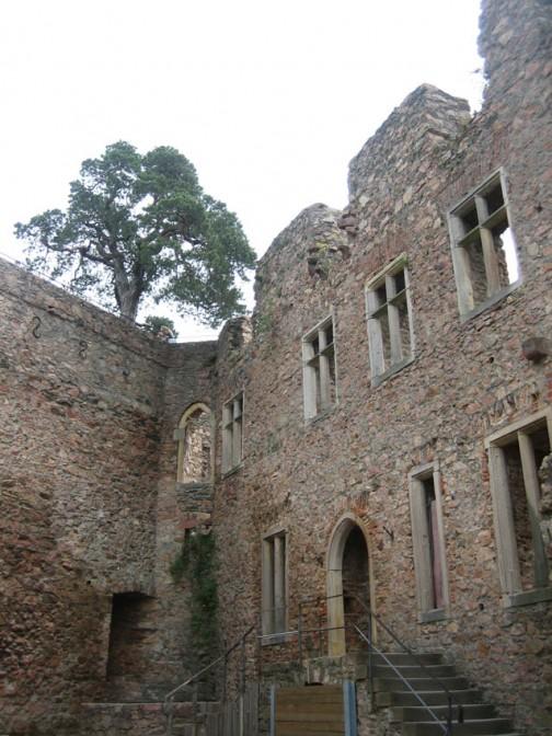 Der Innenhof des Auerbacher Schlosses mit der Kiefer