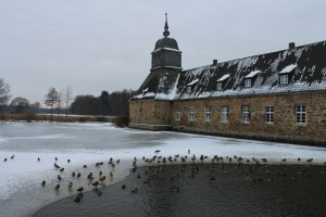 Lehmbecker Enten im Winter
