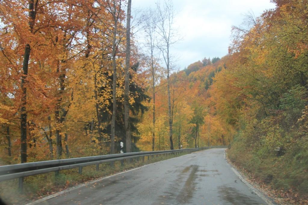 Durch den Herbstwald hinunter zur Donau