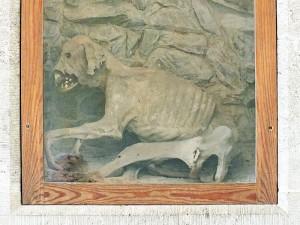 Die Hundemumie von Schloss Burgk / Foto: Wikipedia / Geisler Martin / CC-BY-SA-3.0,2.5,2.0,1.0