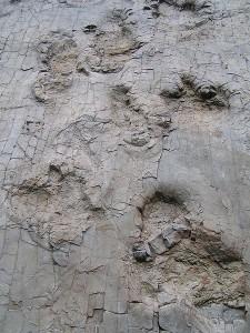 Bad Essen ist bekannt für seine Fachwerkhäuser - und diese 150 Millionen Jahre alten Saurierspuren im Ortsteil Barkhausen / Foto: Wikipedia / Corradox / CC BY 3.0 DE