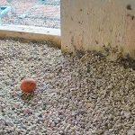 Falken-Webcam auf Nürnberger Burg wieder aktiv
