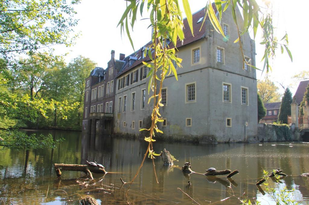 Schildkröten sonnen sich im Schlossgraben