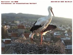 Ein Bild der Storchen-Cam auf dem Dach von Schloss Markdorf / Bild: Screenshot