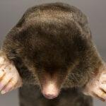 Maulwürfe finden Reste von ostfriesischer Häuptlingsburg