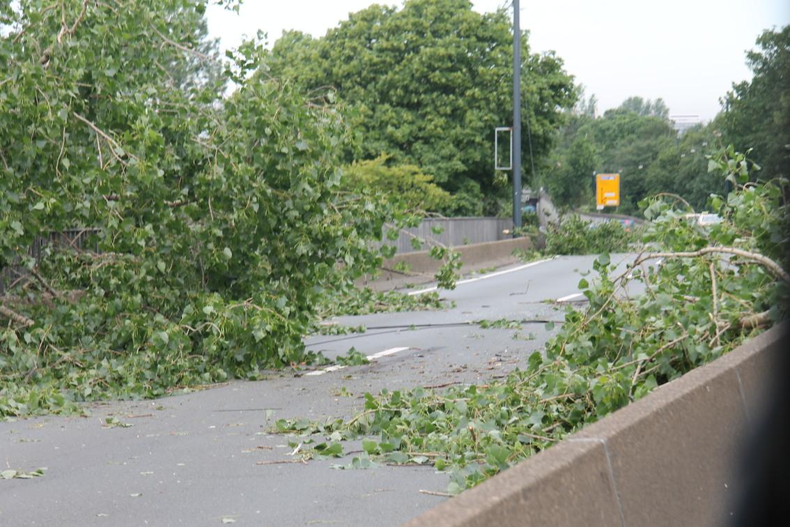Der Tag nach dem Sturm in Düsseldorf: Umgestrüzte Bäume und abgerissene Äste überall