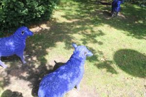 Die Täter brachen an mehreren Schafen die Ohren ab / Foto: Polizei Viersen