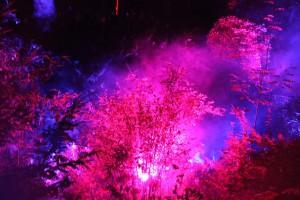 Baumzauber: Im Schlosspark wabert Disconebel im Scheinwerferlicht