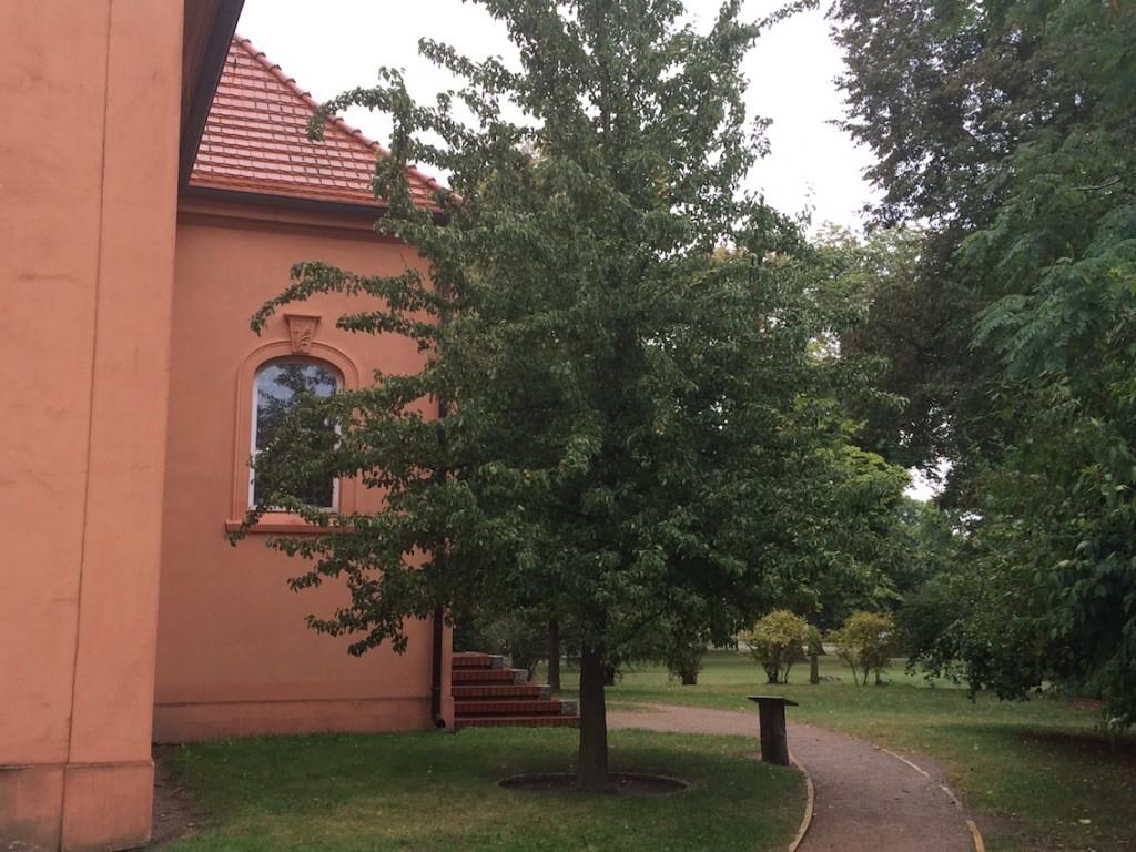 Birnbaum auf Schloss Ribbeck / Foto: Burgerbe / Foto oben: Schloss Ribbeck / Wikipedia / A. Savin / CC-BY-SA 3.0