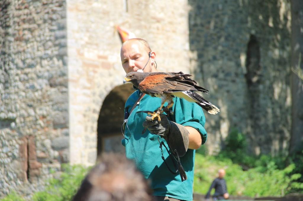Eindrucksvoll: Greifvögel-Flugschau vor der Kasselburg / Fotos: Burgerbe.de