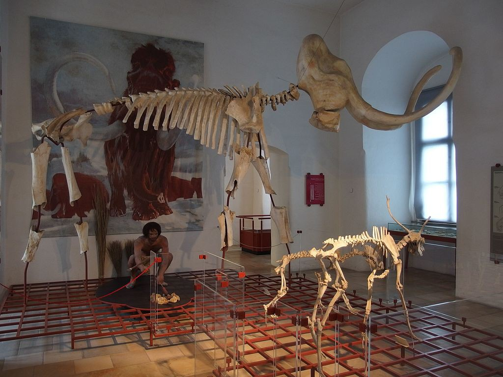Das Mammut ist der Star in der Ausstellung des Museums auf der Willibaldsburg - ihm passierte nichts / Foto: Wikipedia / Chrisi1964 / CC-BY -SA 4.0